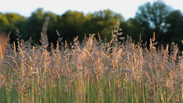 Track 4 - Midsummer Meadow